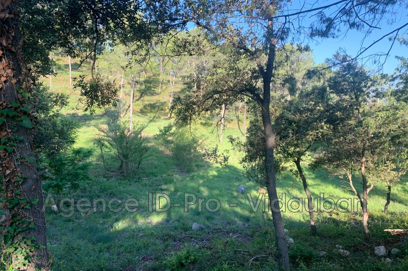 Photo n°11 - Vente terrain Vidauban 83550 - 115 000 €