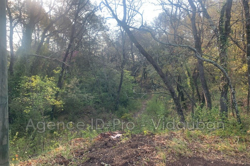 Photo n°10 - Vente terrain Lorgues 83510 - 120 000 €