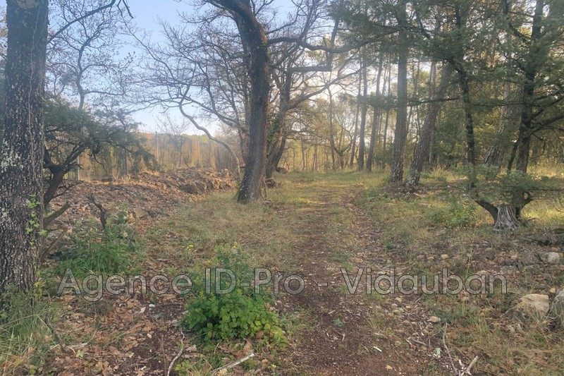 Photo n°2 - Vente terrain Lorgues 83510 - 120 000 €