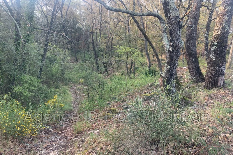 Photo n°2 - Vente terrain Lorgues 83510 - 125 000 €