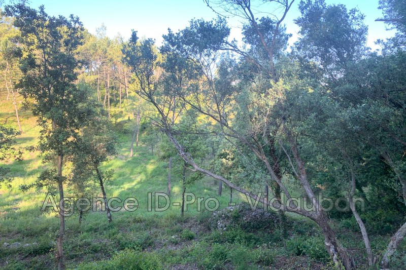 Photo n°1 - Vente terrain Vidauban 83550 - 115 000 €