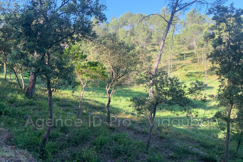 Photo n°5 - Vente terrain Vidauban 83550 - 115 000 €