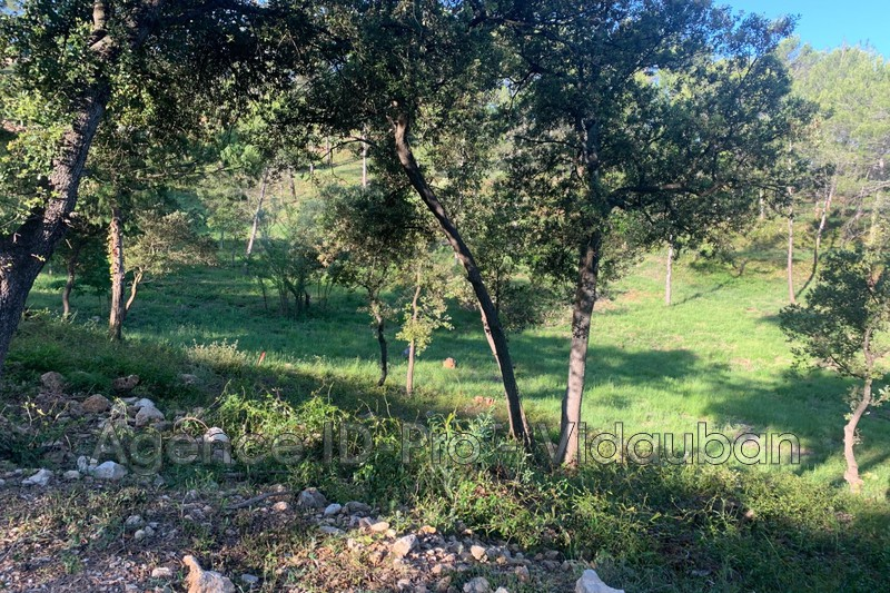 Photo n°7 - Vente terrain Vidauban 83550 - 115 000 €