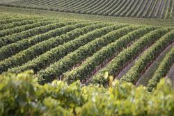 Vente domaine viticole Bandol Capture d'écran 2019-11-19 à 12.33.08 JPEG