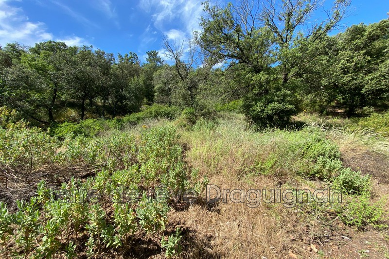 Photo n°2 - Vente terrain Le Muy 83490 - 12 000 €