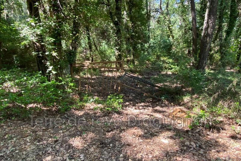 Photo n°5 - Vente terrain Le Muy 83490 - 12 000 €